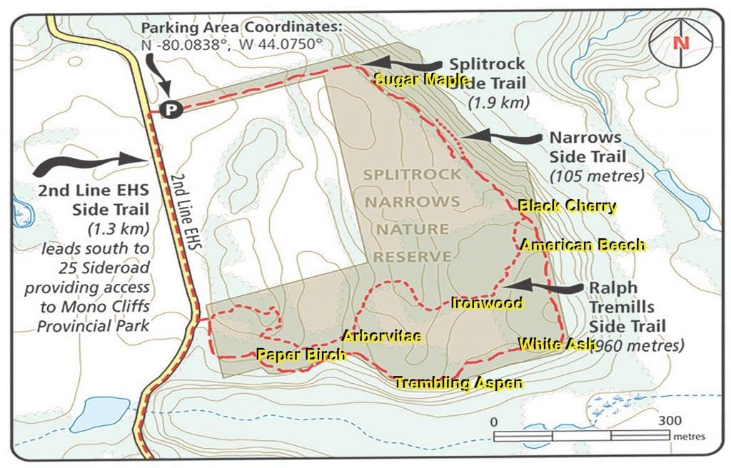 Dufferin Bruce Trail Club Tree Trail